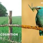 Ešte do konca septembra 2021 je príležitosť podať návrh na cenu Natura 2000
